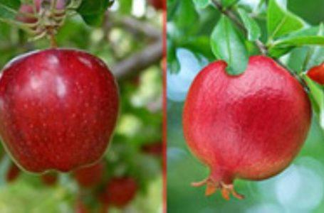 زمان مصرف میوهها