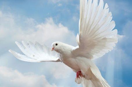 اسراری درباره کبوتر