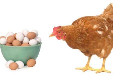 کلیپ/ یکی از بهترین اسپرم سازها در طب اسلامی ، تخم مرغ هست اما …(استاد قاسمی)